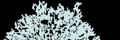 Allium Interiors